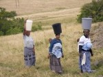 African Women carrying water as well as babies on their backs in South Africa