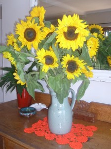 Sunflowers to celebrate Clara's birth